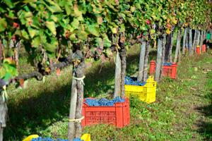 Le strade dei vini irpini